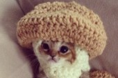 Best Thing on the Internet Today: Kitten Must Wear Adorable Costumes to Survive
