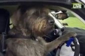 Best Thing on the Internet Today: Dogs Actually Driving Cars